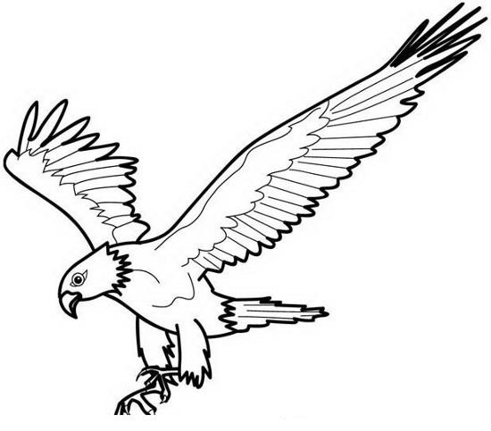 Águilas dibujadas - Imagui